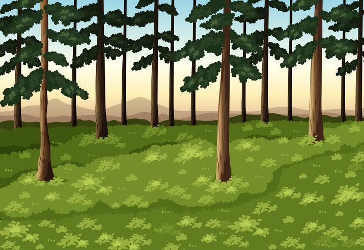 Achtergrondscène met bomen in bos vector