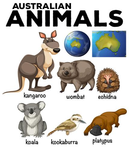 Australische wilde dieren en kaart van Australië vector