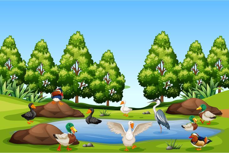Veel vogels in de natuur vector