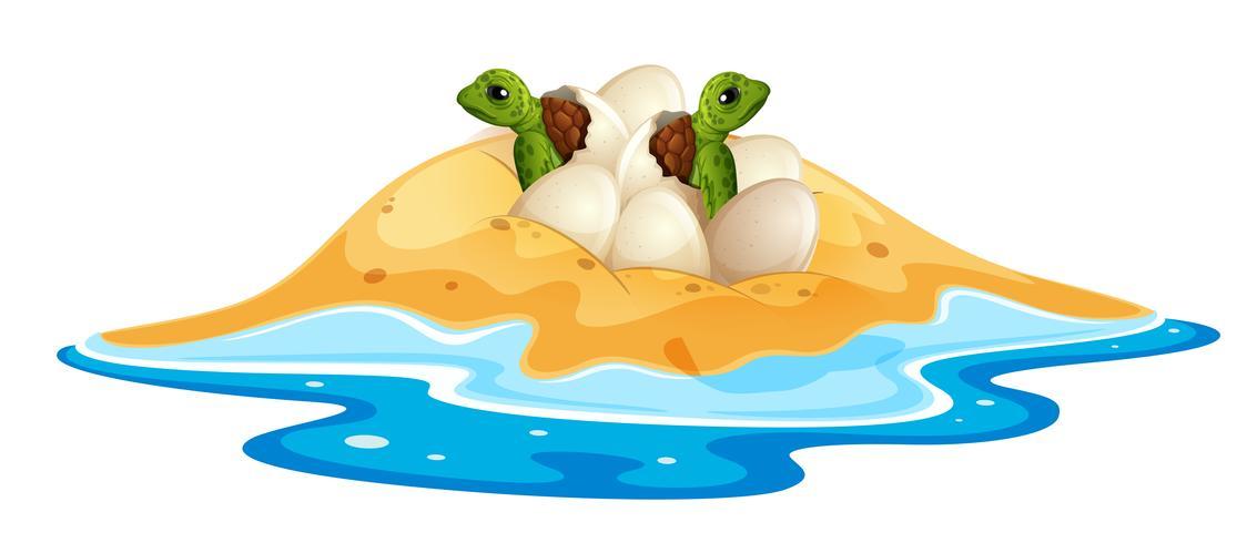 Baby turtle hatchlings ei vector