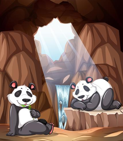 Panda leeft in de grot vector