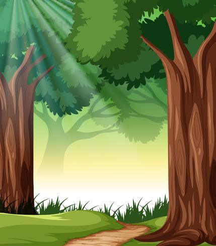 Een tropisch regenwoud achtergrond vector