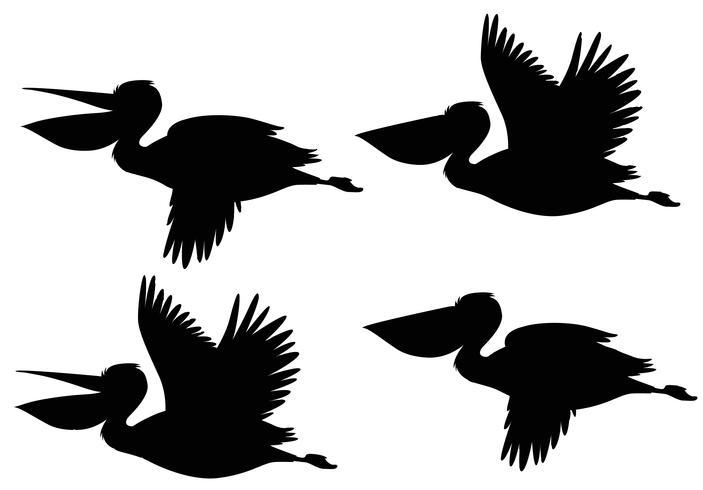 Een set silhouet pelikaan vector