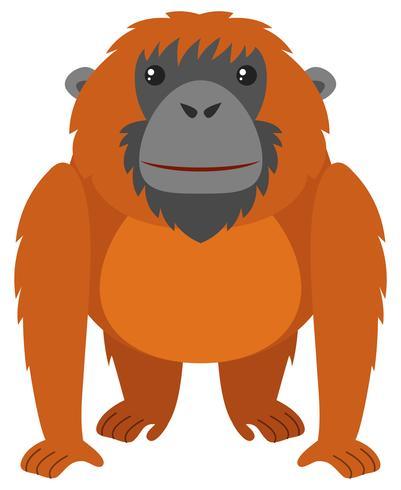 Orangoetan met bruine vacht vector