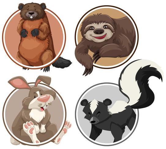 Set van exotische dieren op cirkel sjabloon vector
