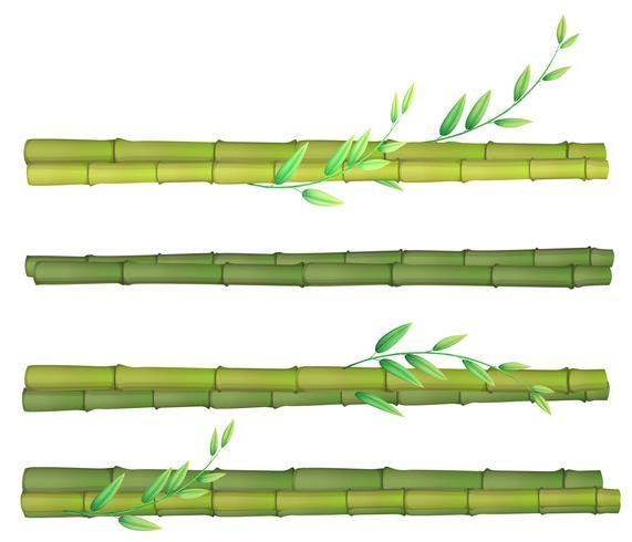 Een reeks van bamboe op witte achtergrond vector