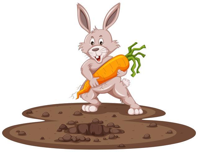 Schattig konijntje en verse wortel in de tuin vector