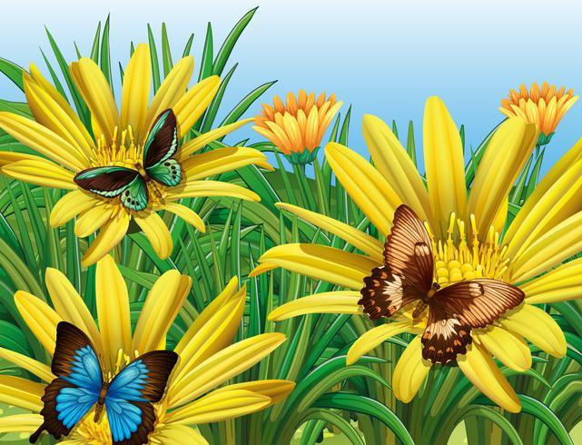 Vlinders in de tuin vector