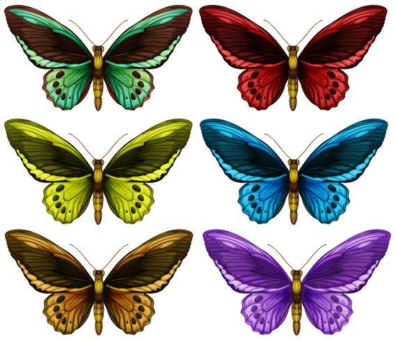 Monarchvlinders in zes verschillende kleurenvleugels vector