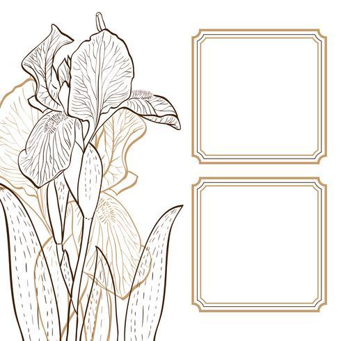 iris voor wenskaart. vector