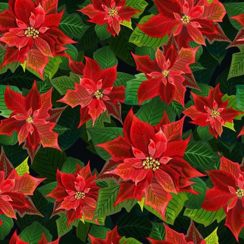 Kerst Winter Poinsettia bloeit naadloze achtergrond, bloemmotief afdrukken in vector