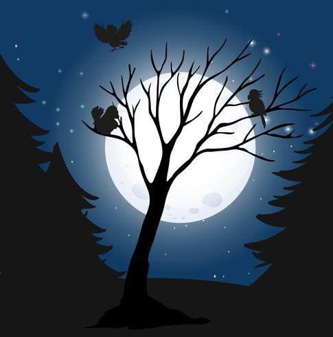 Silhouet donkere nacht en vogels vector