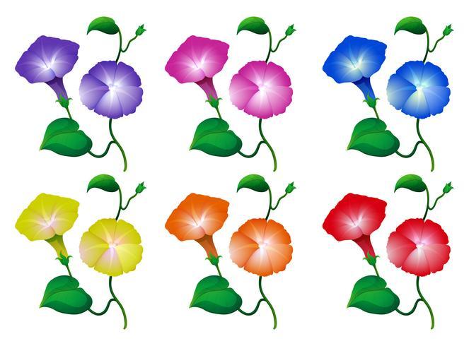 Verschillende kleuren ochtendbloemen vector