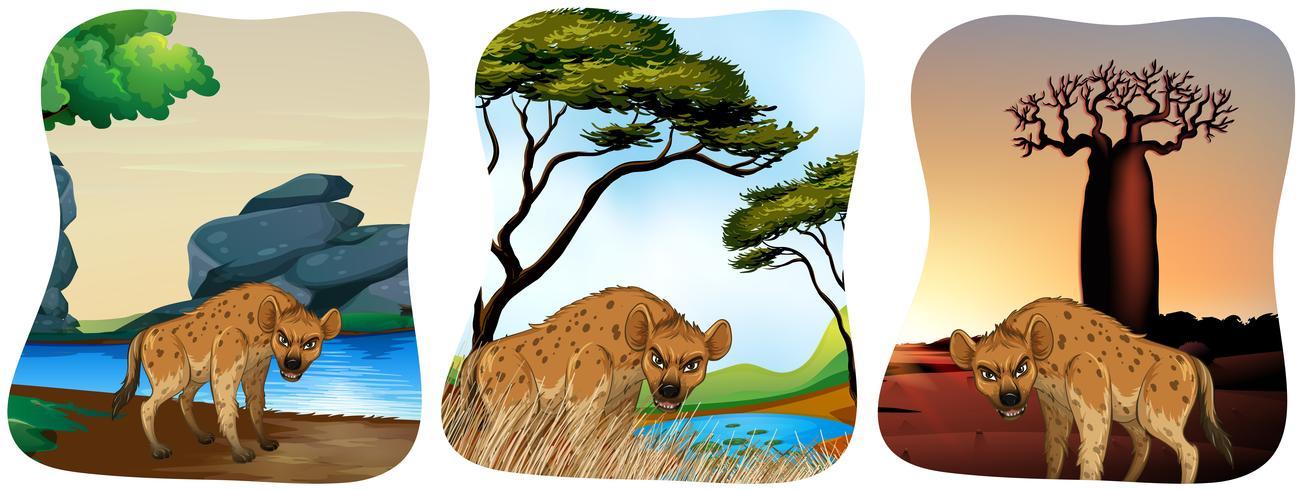 Hyena's in het veld vector