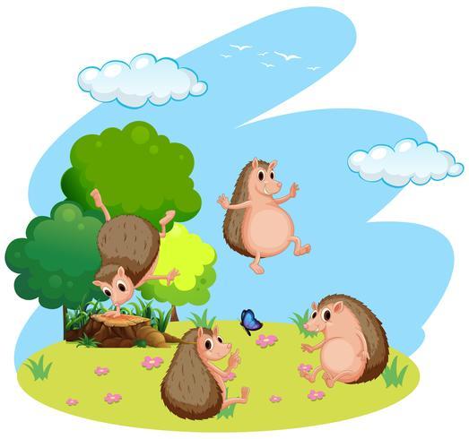 Vier egel in het veld vector