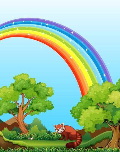 Regenboog en veld vector