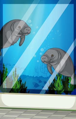 Zeekoeien zwemmen onder de zee vector