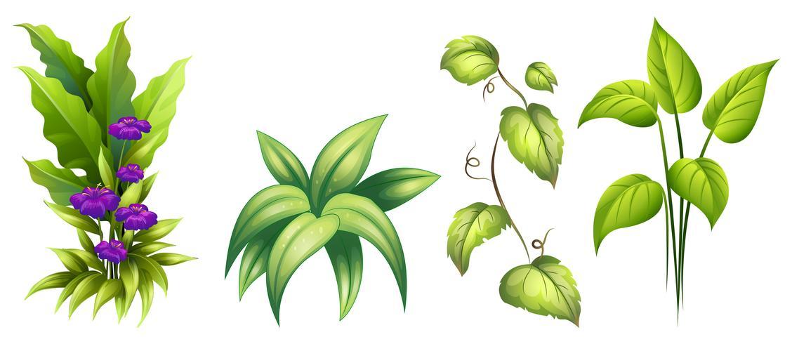 Verzameling van geïsoleerde plant vector