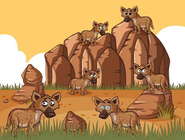 Veel hyena's in het veld vector