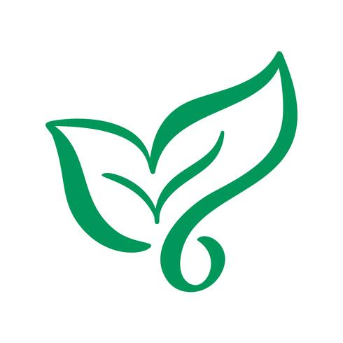 Embleem van groen blad van thee. Ecologie aard element vector pictogram. Eco vegan bio kalligrafie hand getrokken illustratie