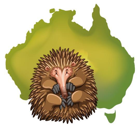 Echidna en Australië kaart vector
