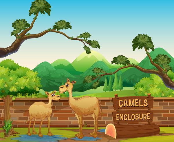 gelukkige kamelen in open dierentuin vector