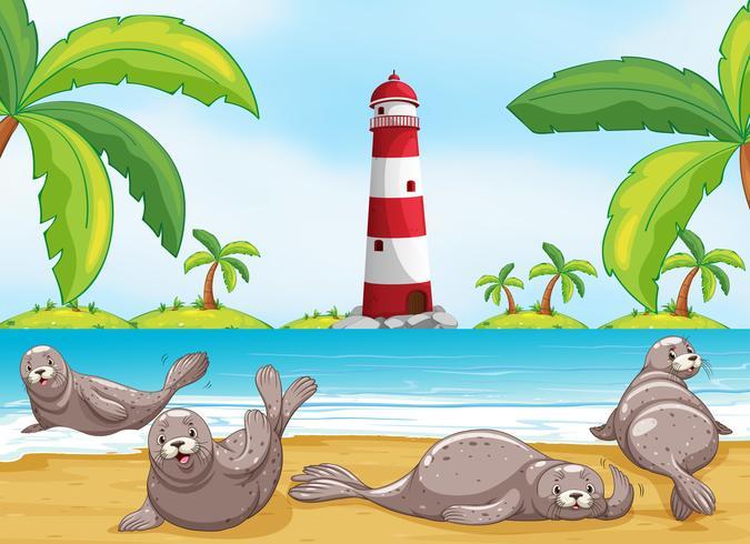 Zeehonden ontspannen op het strand vector