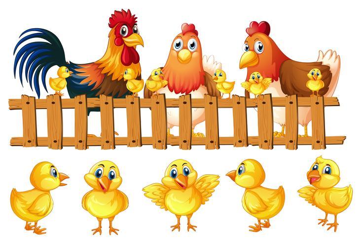 Kippenfamilie met vijf kleine kuikens vector