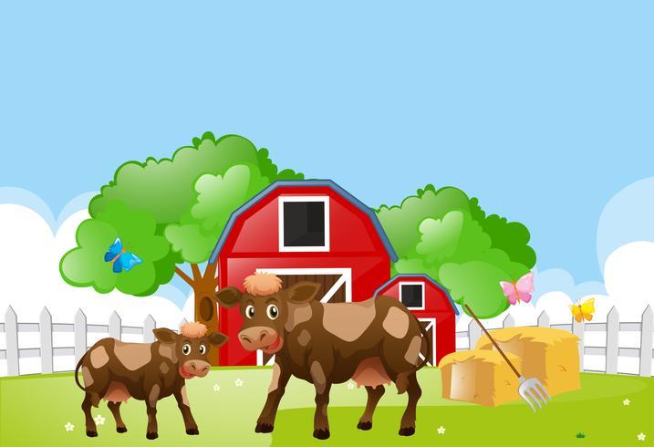 Twee koeien op het erf vector
