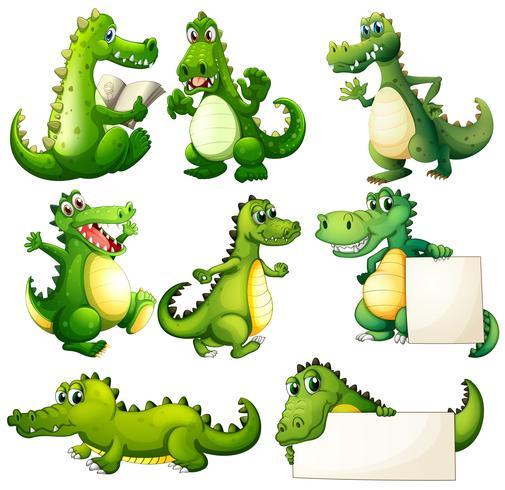 Acht enge krokodillen vector