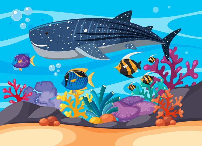 Onderwaterscène met whaleshark en andere vissen vector