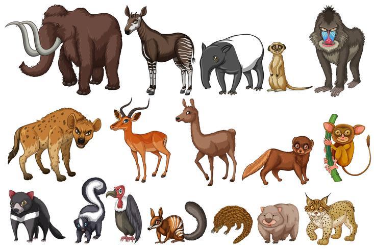 Zeldzame dieren vector
