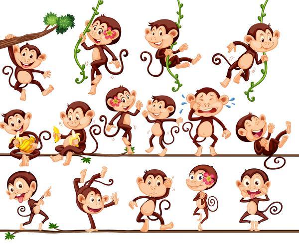Apen die verschillende acties uitvoeren vector