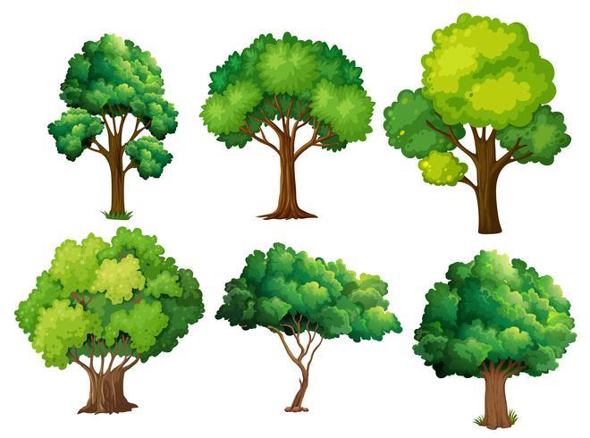 Een set boom vector