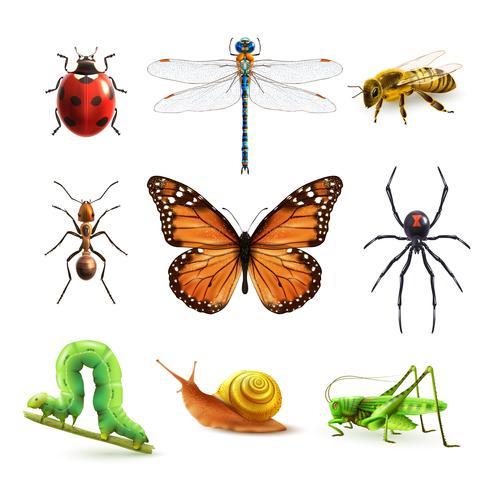 Insecten realistische set vector