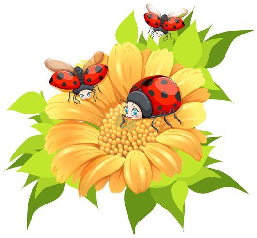 Lieveheersbeestjes die rond gele bloem vliegen vector