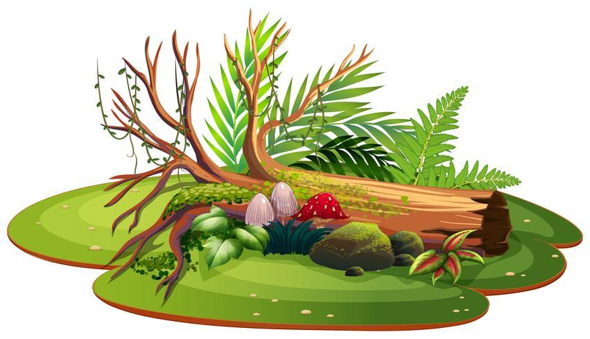 Geïsoleerde natuur voor decoratie vector