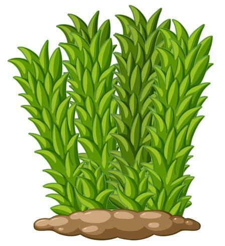Hoog gras op de grond vector