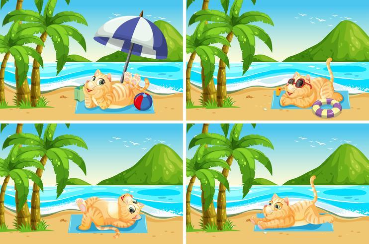 Set van kat op het strand vector