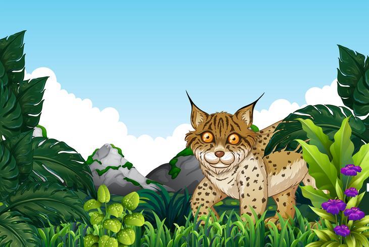 Lynx woont in het bos vector