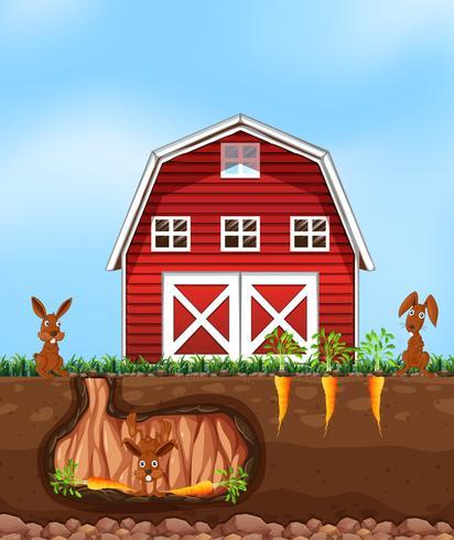 Konijnen graven grond op de boerderij vector
