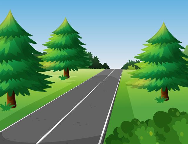 Scène met pijnbomen langs de weg vector