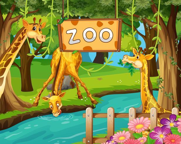 Een giraffamilie in de dierentuin vector