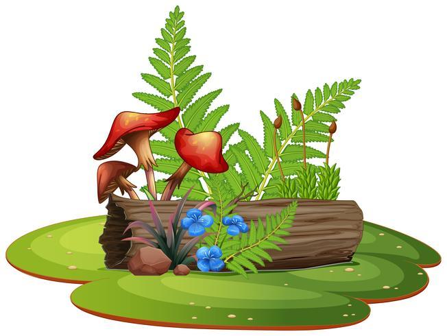 Geïsoleerde plant op witte achtergrond vector