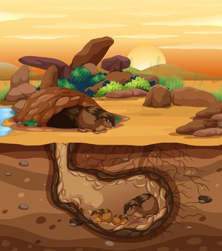 Een cavia-familie die ondergronds leeft vector