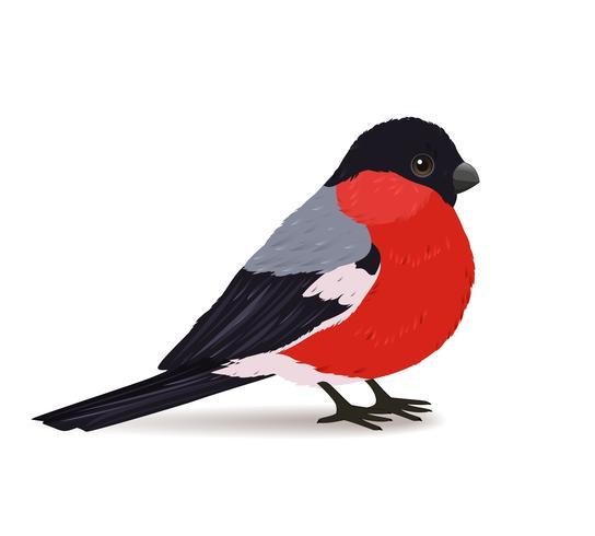 Winter Goudvink vogel vector