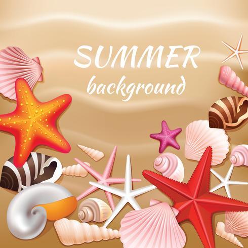 Zeeschelpzand zomer achtergrond vector