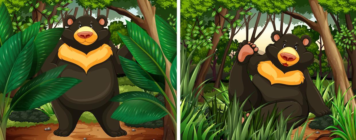 Beren in het bos vector