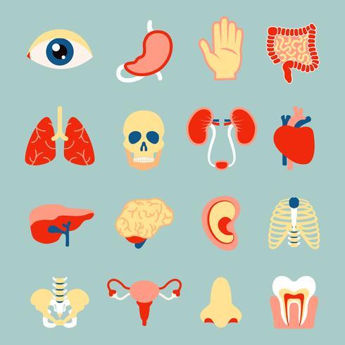 Menselijke organen ingesteld vector