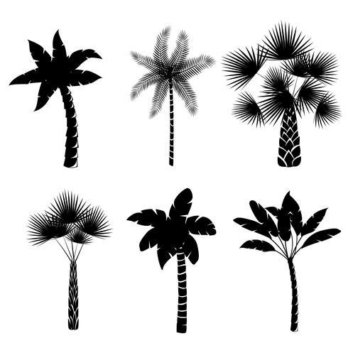 Decoratieve palm bomen collectie vector